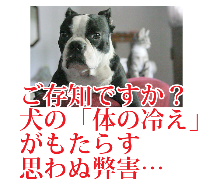 愛犬の冷え対策